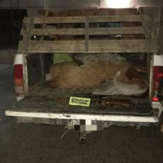 CDRO. RIVADAVIA: Salió a cazar guanacos en plena cuarentena