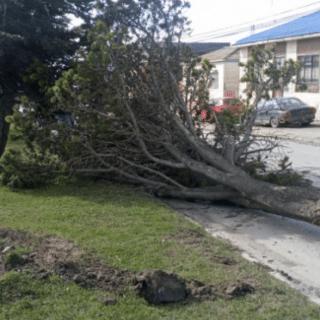 PTA. ARENAS: Vientos de más de 90 km/h provocaron graves estragos en la Región de Magallanes