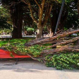 PTA. ARENAS: Vientos provocan varias emergencias en la ciudad