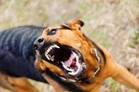 La Justicia confirmó una multa a un vecino de Ushuaia a causa de que su perro mordió a un transeúnte